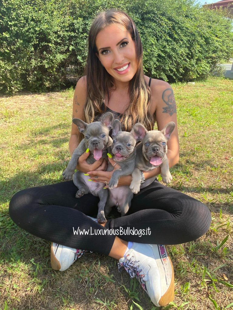 Gloria Luxurious French Bulldogs