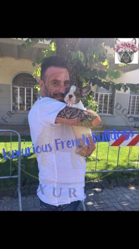 bulldog francese cuccioli disponibili foto