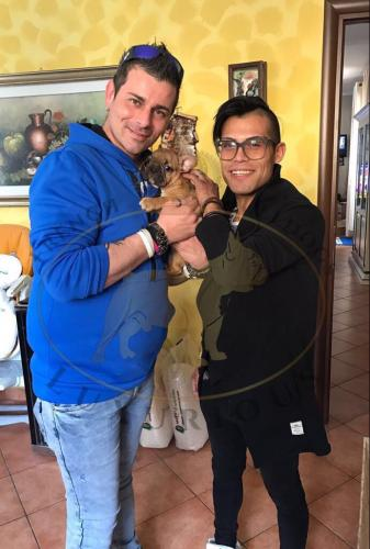 bulldog francese fulvo cucciolo