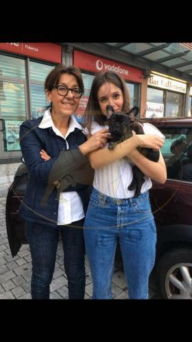 bulldog francese foto cuccioli