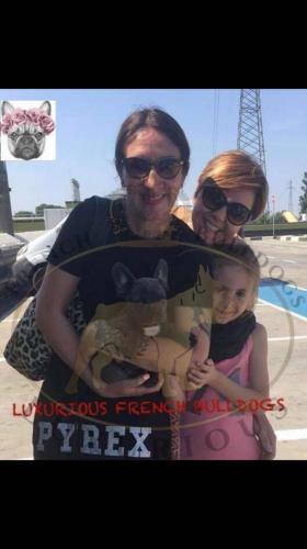 foto di cani bulldog francese